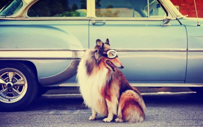 Burning Alive: What Happens to Your Dog in a Hot Car