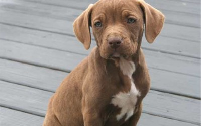 Looking for a Puppy? Read this First!