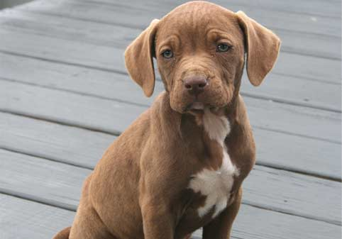 Looking for a Puppy? Read this First! - Dewdney Animal Hospital