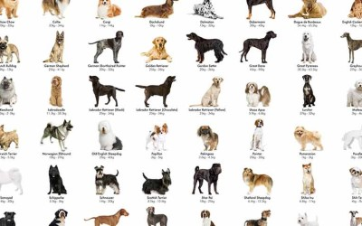 How to Pick a Dog Breed